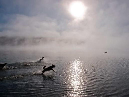 Todos los perritos se van al cielo: funerales para mascotas