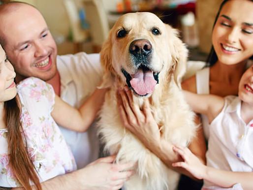 No sólo para humanos: Isapres para mascotas