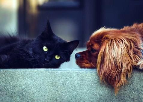 Derechos para mascotas
