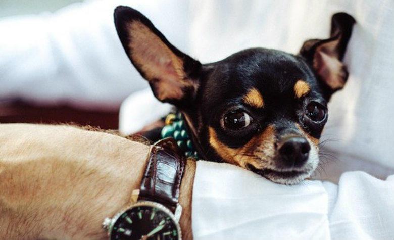 Mascotas: ayudan a envejecer mejor