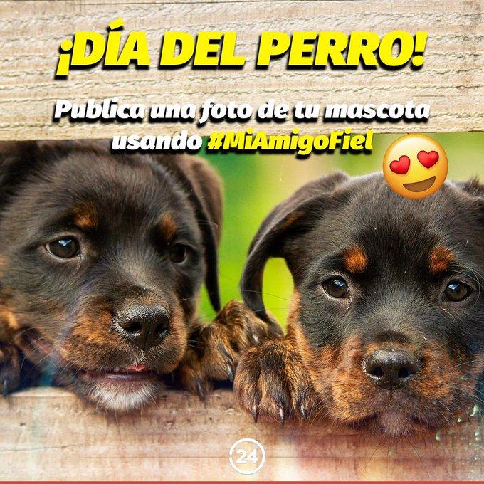 Día internacional del perro: