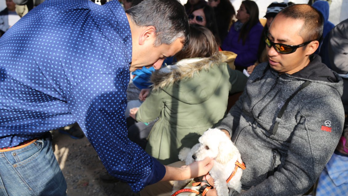 70 mil mascotas inscritas en O'Higgi