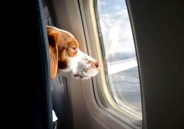 Las mascotas también vuelan buisness