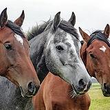 horses-1414889_1920.jpg