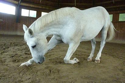 horse-96207_1920.jpg