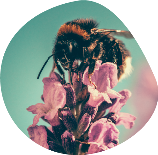 R3-Bee.png