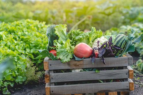 BBQ Salad Box