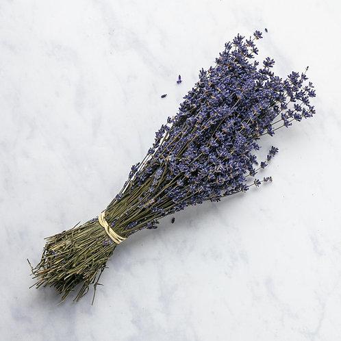 Bunched Kent Lavender