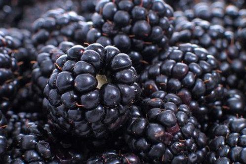 Local Kent Blackberry Punnet
