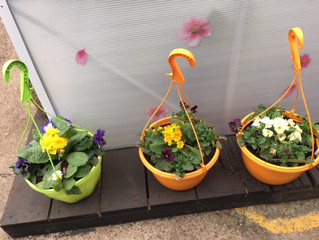 No time to do your hanging baskets / planters! We are here to help.