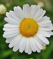 flower-50157_1280.webp