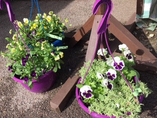 Get your autumn/ winter hanging baskets.