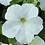 Thumbnail: Petunia Fanfare White