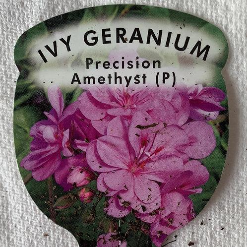 Ivy Geranium Precision Amethyst