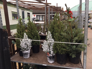 Christmas trees have been flying out of the door