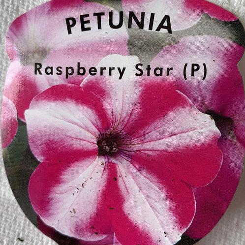 Petunia Raspberry Star