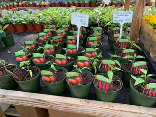 Veg plants available now.