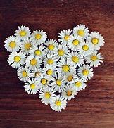 daisy-1403041_1280.jpg