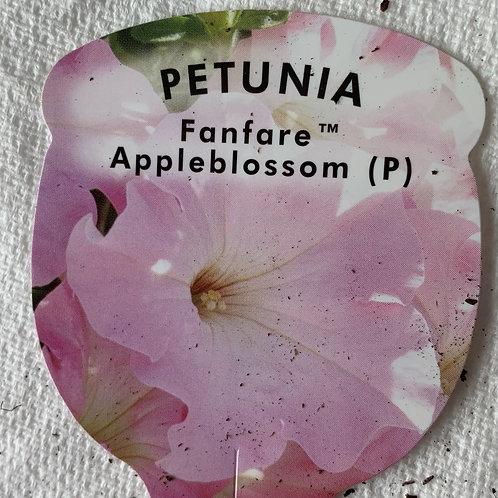 Petunia Fanfare Appleblossom