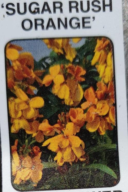 Wallflower - Sugar Rush Orange (6 packs)