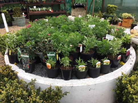 plants6.jpeg