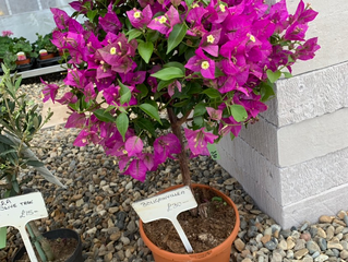 We have lots of beautiful plants