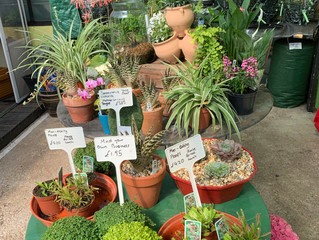 The sun is out and we have lots of lovely plants