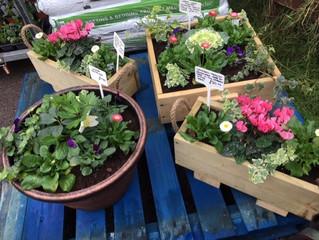 Winter hardy planters