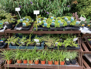 Don't forget our Perennial Paradise special offer!