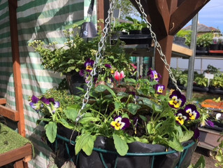 Have your hanging baskets refilled for autumn/winter.