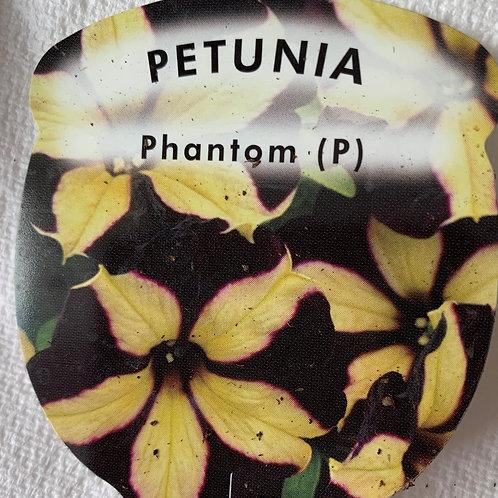 Petunia - Phantom