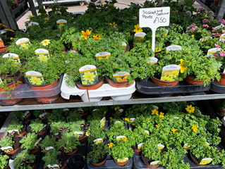 Basket and container plants available now