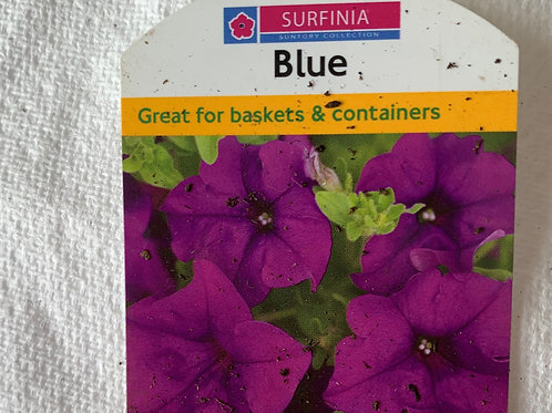 Petunia - Surfinia Blue