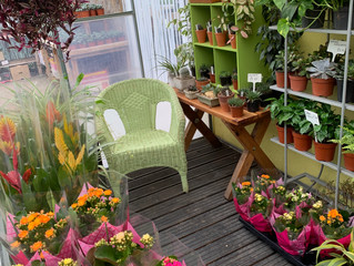 Items to brighten up your homes and gardens