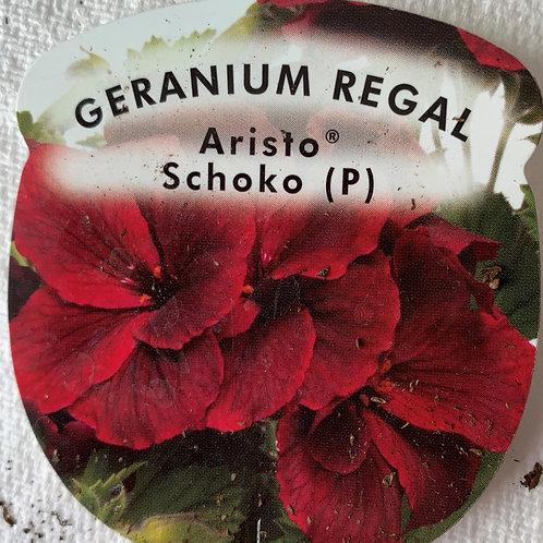 Geranium Regal - Aristo Schoko