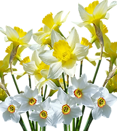 spring-3002469_1280.webp