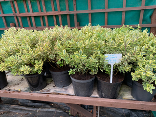 Do you want quality plants at amazing prices?