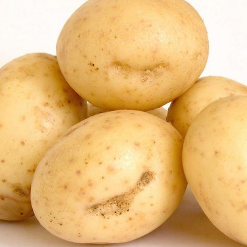 Pre order :Maincrop: Maris Piper  (Price is for 1 tuber)