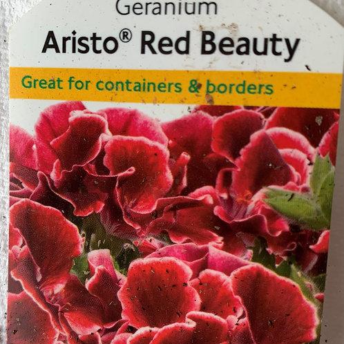 Geranium Regal - Aristo Red Beauty