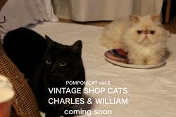 CHARLES & WILLIAM-3 POMPOMCAT