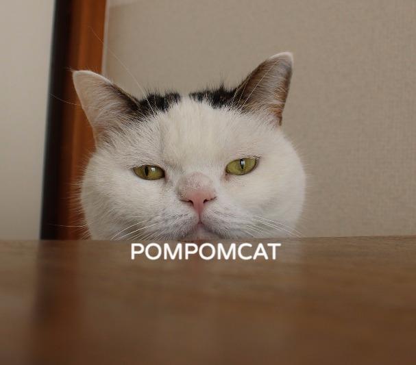 POMPOMCAT_edited