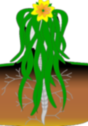plant-152111_640.png