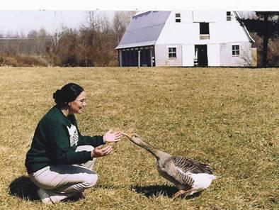 Moritz, the Goose