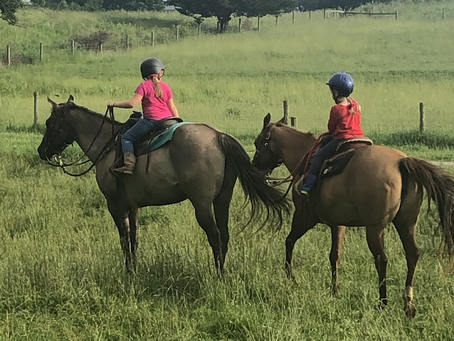Moving Cows with Kid Cowgirls