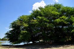 Bosque seco 1