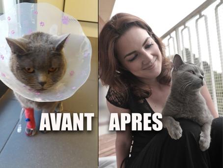Condamné par la médecine, j'ai sauvé mon chat de la mort!