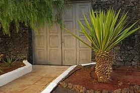 Landscape bed near house with small palm tree