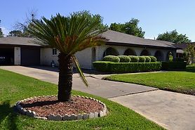 Landscaping in front of home with medium sized palm tree in landscape bed and precisely trimmed shrubs across driveway