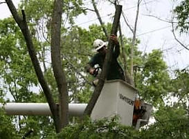Emergency tree service worker in utitlity truck basket cutting a tree with a chainsaw