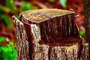Close up image of a tree stump